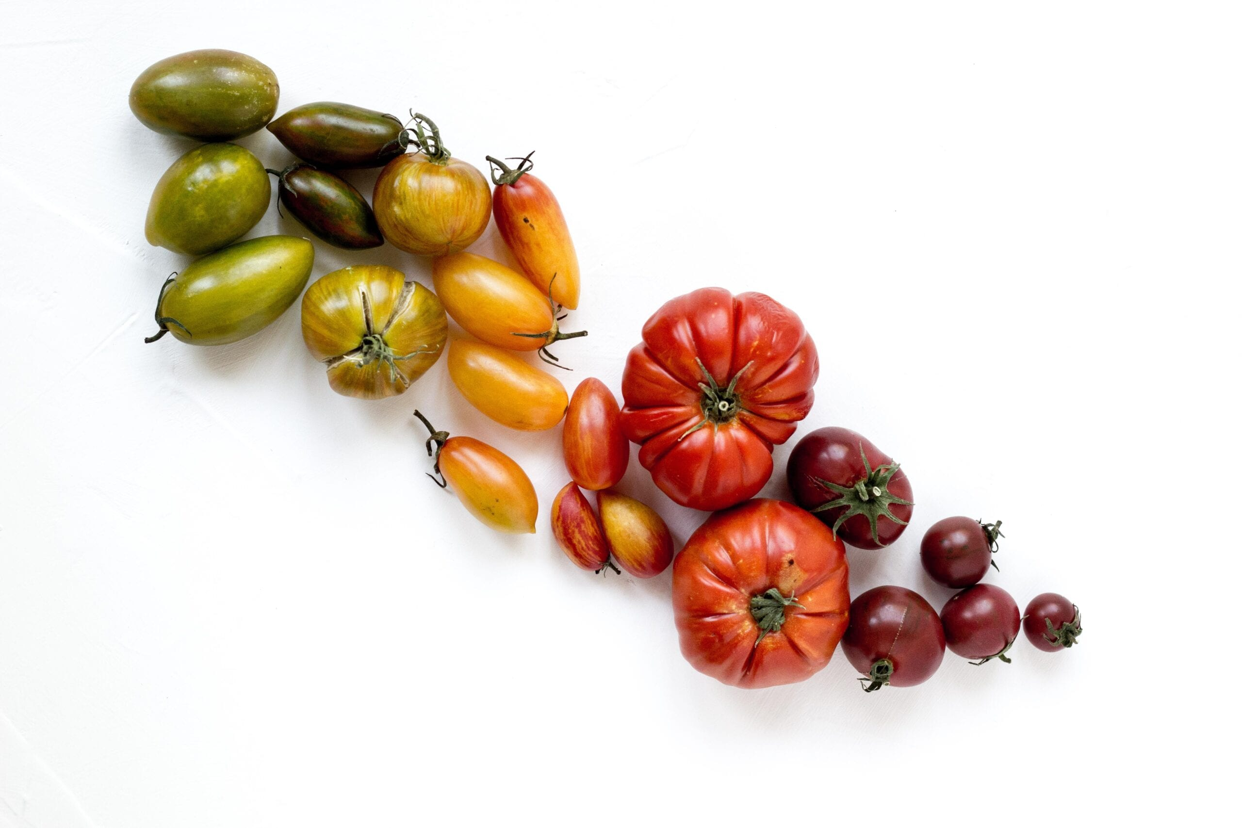 tomatoes of many colours with a white background