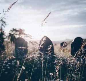 Three headstones in a sunny field with wild grasses growing
